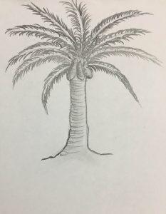 coconut-tree-nupurspeaks-4